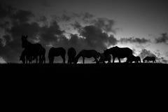 马剪影反对天空的 黑色白色 库存图片
