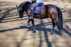 马动物骑马车手体育,乘驾 免版税库存照片