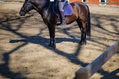 马动物骑马车手体育,骑师 库存图片