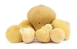 马勃菌蘑菇在白色的马勃属perlatum 库存图片
