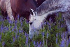 马吃一棵草 免版税库存图片