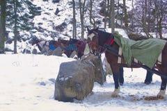 马吃着干草在中止和等待游人 免版税图库摄影