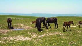 马吃草和饮料水在一个领域本质上 股票视频