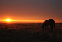 马吃草在日落 免版税库存照片