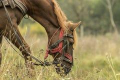 马吃 库存照片