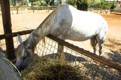 马吃 免版税图库摄影
