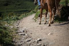 马和人们乔治亚山路的  图库摄影