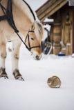 马和兔子 免版税库存图片
