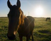 马和太阳 免版税图库摄影