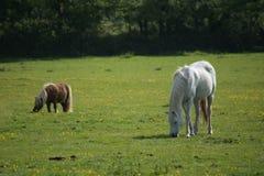 马和小马朋友 免版税图库摄影