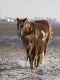 马和小马 免版税库存照片