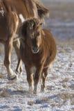 马和小马 免版税库存图片