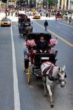 马和支架乘驾在中央公园 库存图片