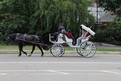 马和支架在中央公园 库存照片