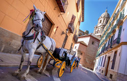 马和支架在城市街道在马拉加,西班牙 免版税库存照片