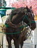 马和支架 免版税库存图片