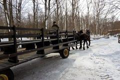 马和支架 免版税库存照片
