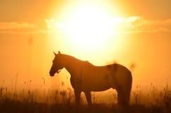 马和日出 免版税库存照片