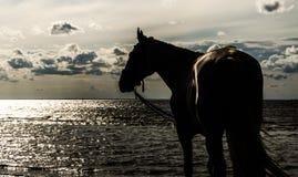 马和日落 库存图片