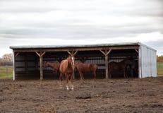 马和朋友在惨淡的天 库存图片