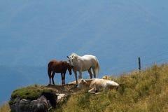马和母牛 免版税库存照片