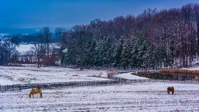 马和池塘一个农场的在农村约克县,宾夕法尼亚 库存照片