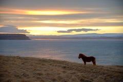 马和湖 免版税库存照片