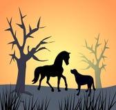 马和狗由日落 库存照片