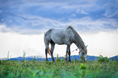 马和草皮 免版税库存图片