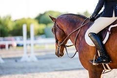 马和车手在一个骑马事件 图库摄影
