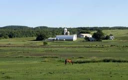 马和领域 免版税库存照片