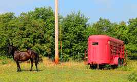 马和马拖车 免版税库存图片