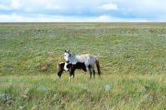 马和驹 免版税库存照片