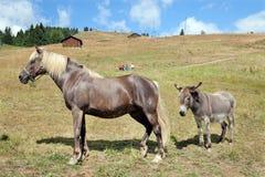 马和驴在山领域 免版税图库摄影
