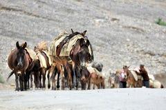 马和驴有蓬卡车在岩石山附近在北Indi 库存照片