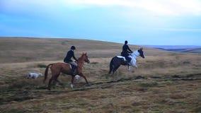 马和Fox猎犬, Dartmoor,德文郡 股票视频