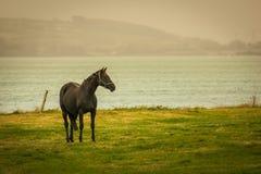 马和lanscape在县黄柏 爱尔兰 库存图片