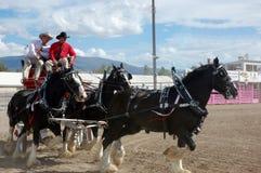 马商展2013年在蒙大拿 库存照片
