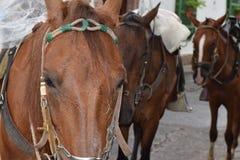 马在一个小的镇 库存图片