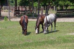 马在一个被操刀的牧场地 库存照片