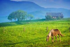 马在一个绿色草甸 库存图片