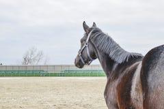 马在体育场附近走了 库存图片