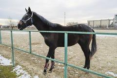 马在体育场附近走了 免版税库存图片
