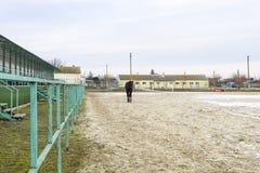 马在体育场附近走了 免版税库存照片