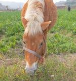 马在农场 免版税库存图片