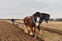 马在农田领域的被拉扯的耕犁在农村英国 免版税库存照片