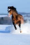 马在冬天背景疾驰 免版税库存照片