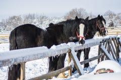 马在冬天 免版税库存图片