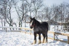 马在冬天 库存照片