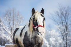 马在冬天 免版税库存照片